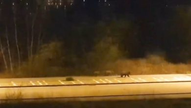 Photo of Αρκούδες κυκλοφορούν στην Καστοριά εν μέσω καραντίνας – [video]