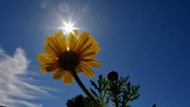Photo of Καιρός σήμερα: Καλοκαιρινός με ήλιο και 30 βαθμούς Κελσίου